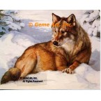 Wolf in Snow  - #ROR405  -  PRINT