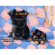 Yorkshire Terrier Pup  - #ROR430  -  PRINT