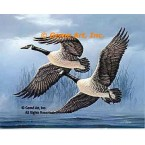 Canadian Geese  - #QOR25  -  PRINT