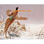 Pheasant in Snow  - #MOR602  -  PRINT