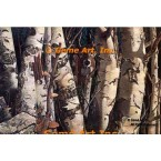 Birches With Whitetail  - #MOR610  -  PRINT