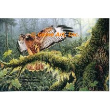 Red Tail Rendezvous  - ROR900  -  PRINT