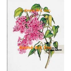 Lilac Branch  - WOR120  -  PRINT