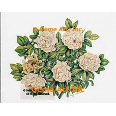 White Rugosa Roses  - WOR124  -  PRINT