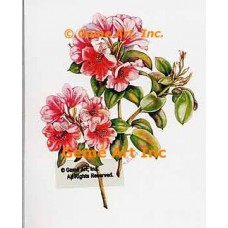 Pink Rhododendrons  - WOR130  -  PRINT