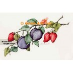 Plums & Strawberries  - ZOR805  -  PRINT