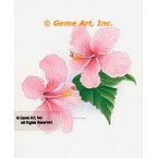 Delicate Pink Hibiscus  - #LOR908  -  PRINT