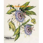Passion Flowers  - #MOR907  -  PRINT