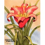 Red Day Lily  - #MOR801  -  PRINT