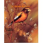 Evening Grosbeak  - IOR28  -  PRINT