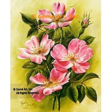 Canadian Rose  - IOR38  -  PRINT