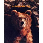 Brown Bear  - #IOR55  -  PRINT