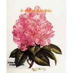 Pink Rhododendron  - #IOR81  -  PRINT