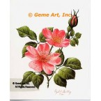 Canadian Rose  - IOR84  -  PRINT