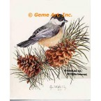 Black-capped Chickadee  - IOR87  -  PRINT