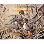 Pintails  - #UOR10  -  PRINT