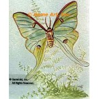 Butterfly  - #TOR2012  -  PRINT