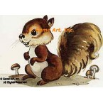 Squirrel  - #TOR291  -  PRINT