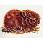 Gentle Rabbit  - #TOR5109  -  PRINT