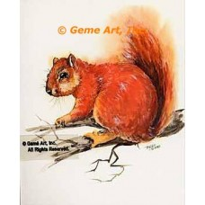 Squirrel  - #TOR5135  -  PRINT