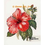 Red Hibiscus  - #TOR5168  -  PRINT