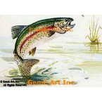 Rainbow Trout  - #TOR5189  -  PRINT