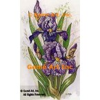 Purple White Iris  - TOR5241  -  PRINT
