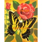 Butterfly & Roses  - XBBF41  -  PRINT