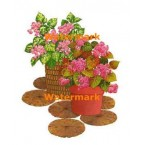 Potted Flowers  - XBFL1064  -  PRINT