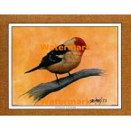 Western Tanager  - #XKFL1065  -  PRINT