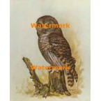 Wise Old Owl  - #XKL1191  -  PRINT