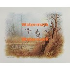 Getting Away-Pintails  - XS2373  -  PRINT