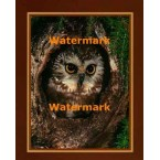 Peek A Boo Owl  - #XKLLAM2151  -  PHOTO PRINT
