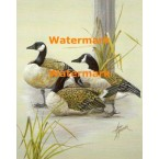 Canadian Geese  - XBBI-1161  -  PRINT