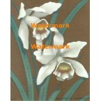 White Orchids on Gold  - XBFL1778  -  PRINT