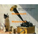 Feline Musical  - XKALAM2168  -  PHOTO PRINT
