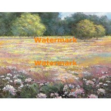 Colorful Field  - XBSC3382  -  PRINT