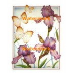 Iris And Butterflies  - XKFL5429  -  PRINT