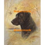 Black Lab  - XD50649  -  PRINT