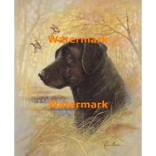 Black Lab  - #XD50643  -  PRINT