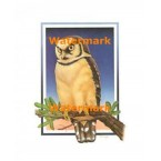 1.  Yellow Hawk Owl  - #XKL6142  -  PRINT