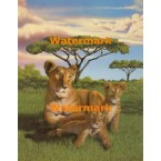 Lioness And Cubs  - #XKL6302  -  PRINT