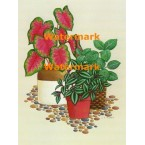 Potted Plants  - XBFL1070  -  PRINT