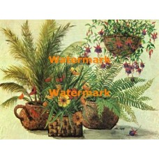 Hanging Fuchsias and Ferns  - XBFL889  -  PRINT