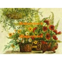 Poppies, Daisies, and Ferns  - XBFL890  -  PRINT
