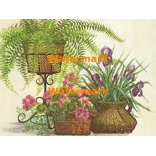 Irises, Geraniums, & Ferns  - XBFL923  -  PRINT