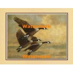 Canadian Geese In Flight  - #XKFL7177  -  PRINT