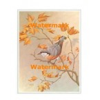 Nuthatch & Autumn Leaves  - #XKFL8302  -  PRINT