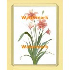 1.  Imperial Lily  - #XKFL9561  -  PRINT