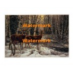 White-Tailed Deer  - #XBHD0003  -  PRINT